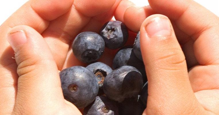 fructe de padure vă ajută să pierdeți în greutate
