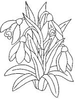 Desene De Colorat Ghiocei Qbebe Planse Si Imagini De Colorat