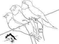 Desene De Colorat Randunici Qbebe Planse Si Imagini De