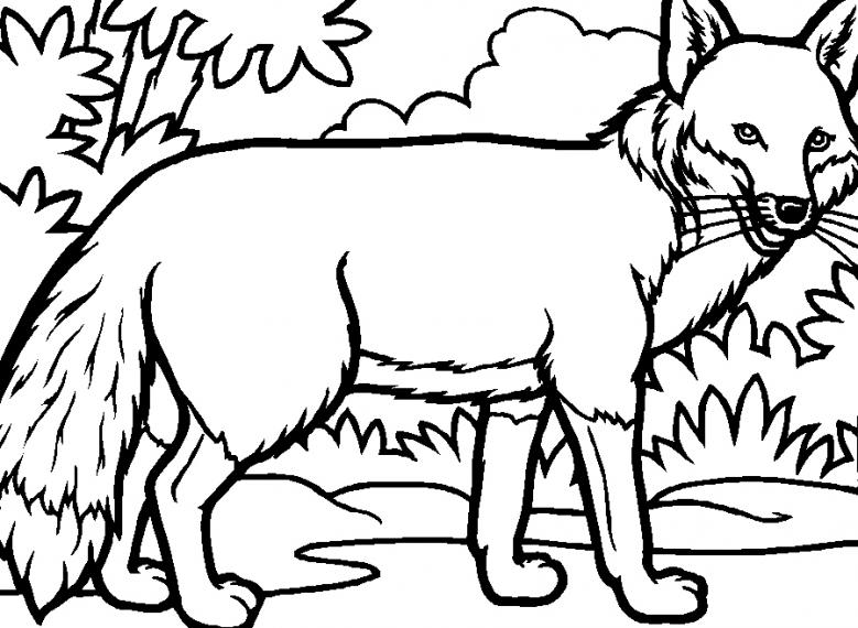 Desene Cu Animale Salbatice De Colorat Idea Gallery