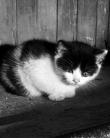 Mami, să luăm pisicuţa asta acasă. Ai lăsa un copil părăsit pe stradă?