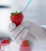 Ce trebuie sa stii despre alimentele modificate genetic