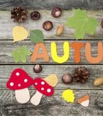Castane, ghinde, frunze de toamnă: activități pentru cei mici