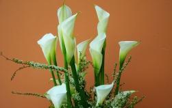Flori care simbolizează noi începuturi