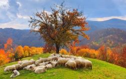 10 detalii despre tradițiile de Sfântul Dumitru pe care nu le știai