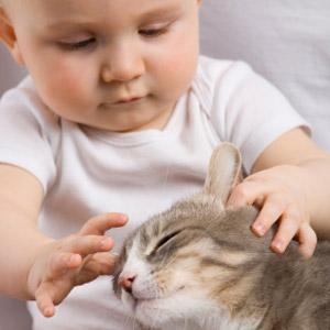 riscuri bebelus si animale