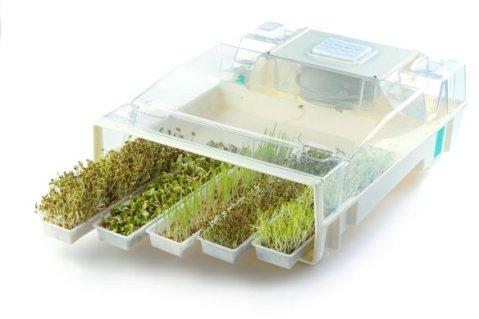 seminte germinate si crescute
