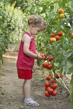 Activitate de vara pentru copii-Gradinaritul