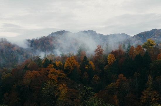 Padure spectaculoasa din Slovacia