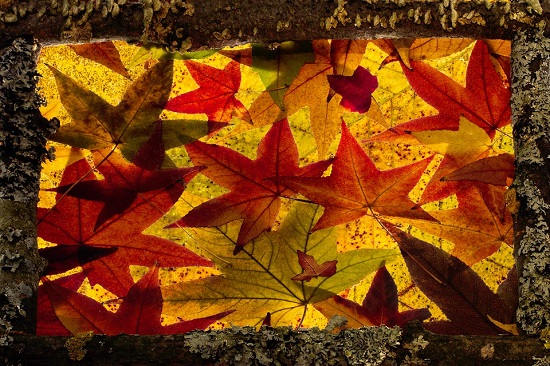 Suncatcher din frunze de toamna