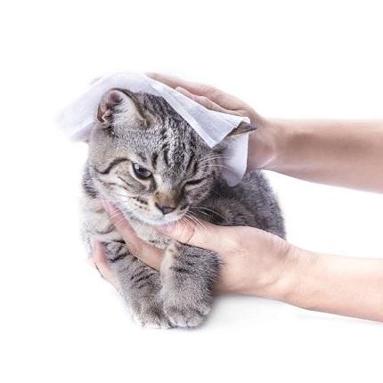 Pisica stearsa cu un servet umed