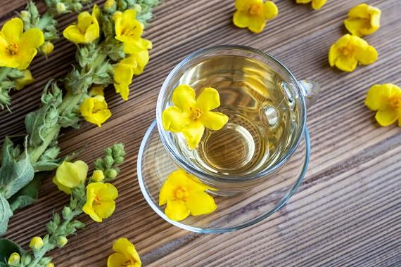 Planta si ceaiul de lumânărică