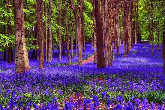 Padure spectaculoasa din Belgia