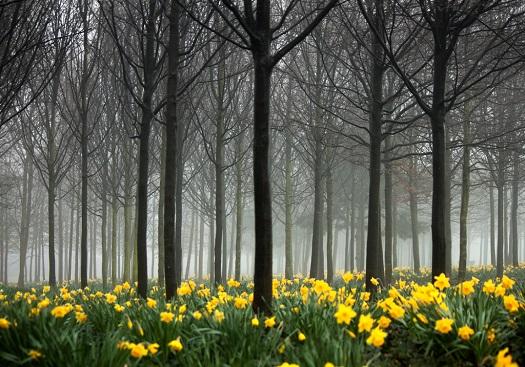 Padure spectaculoasa din Anglia