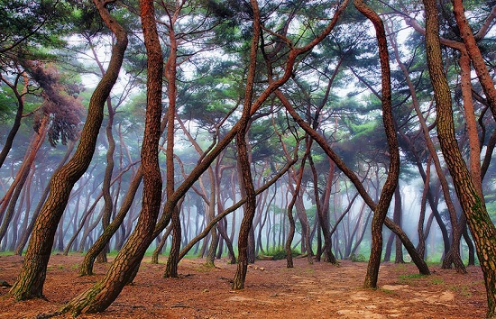 Padure spectaculoasa din Cehia
