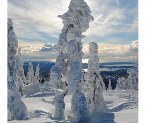 Padurea spectaculoasa de pe  Muntele Seymour, SUA