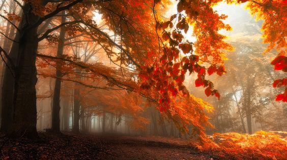 Padure spectaculoasa din Carpatii Albi