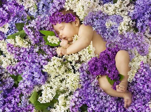 Bebelus ce doarme printre flori de liliac