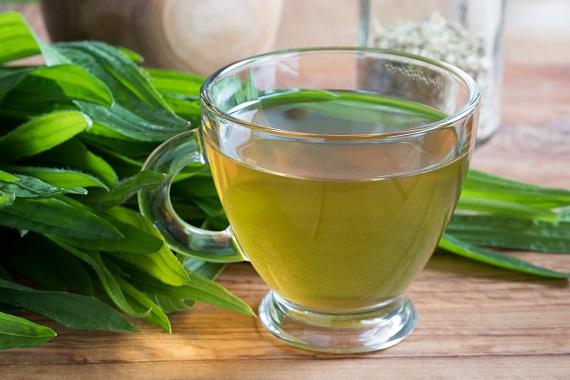 Ceai de patlagina proaspata