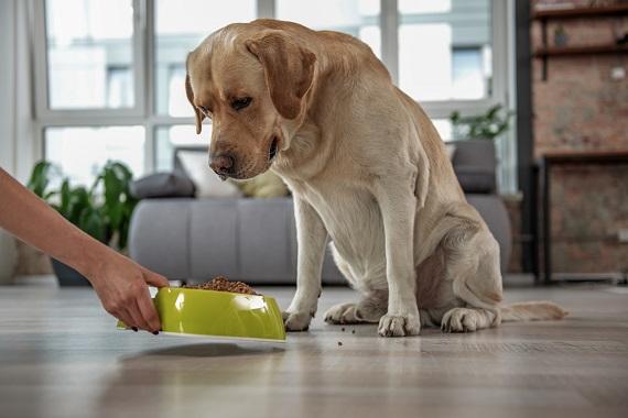 Caine aflat in fata unui recipient cu hrana