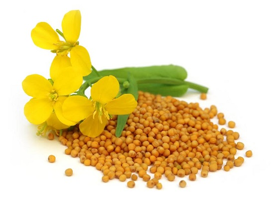 Seminte de mustar si floare