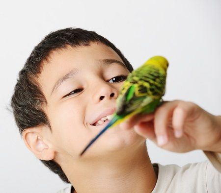 Baietel ce tine pe mana un papagal
