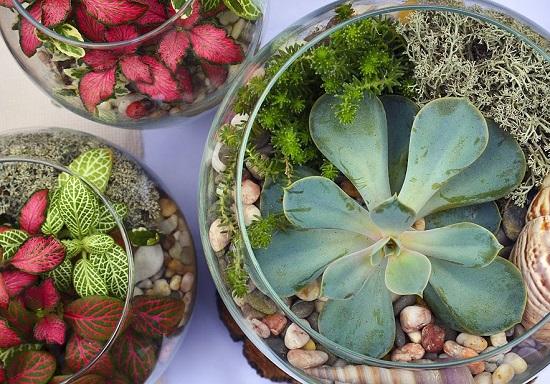 Plante potrivite pentru o gradina in miniatura