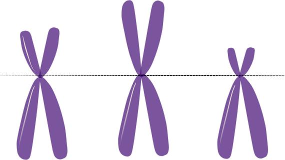 Cromozomi X