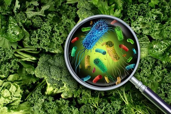 Legume cu frunze verzi, pe care se afla bacterii