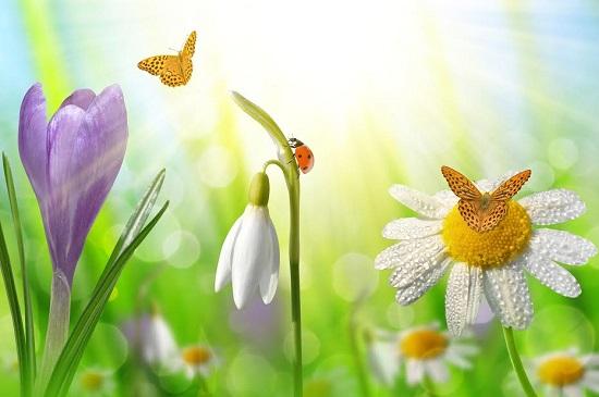 Flori de primavara, gargarite si fluturi