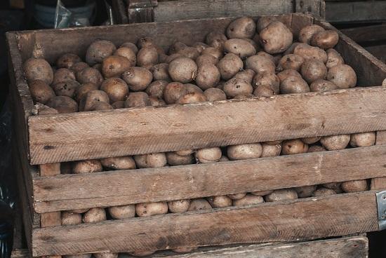 Cartofii trebuie feriti de lumina soarelui