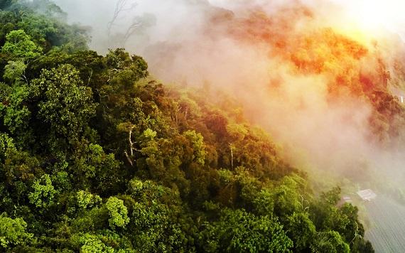Aburi ce ies dintr-o padure tropicala