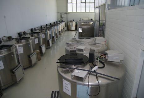 containere celule stem