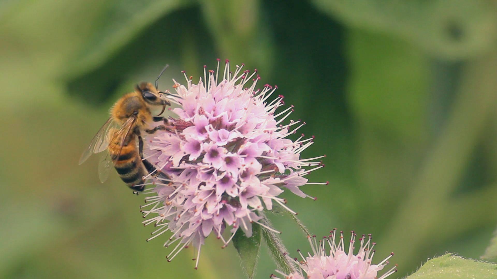 biodiversitate 2