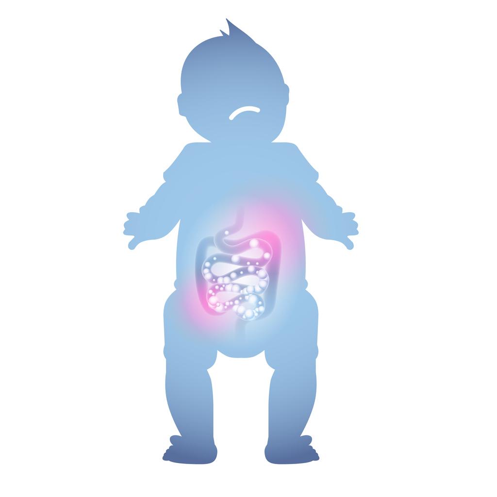 sistem digestiv bebelus