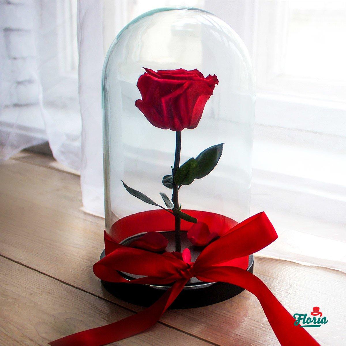 trandafiri criogenati 2