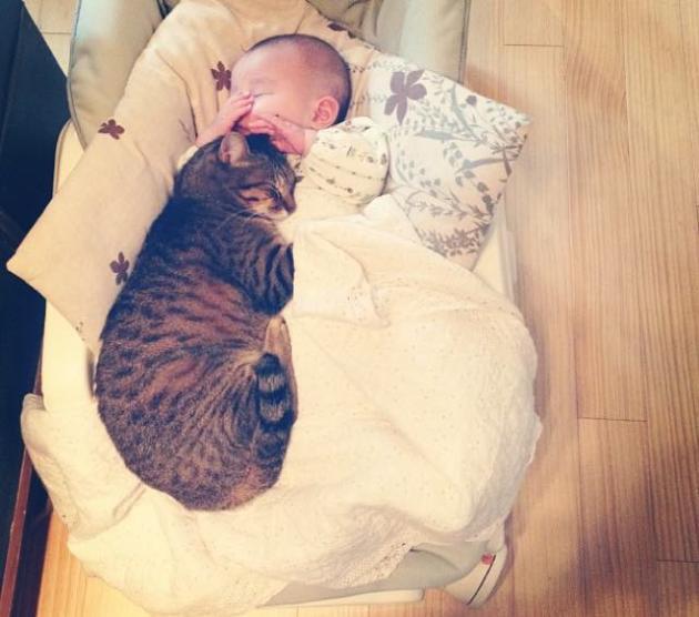 copil si pisica 1