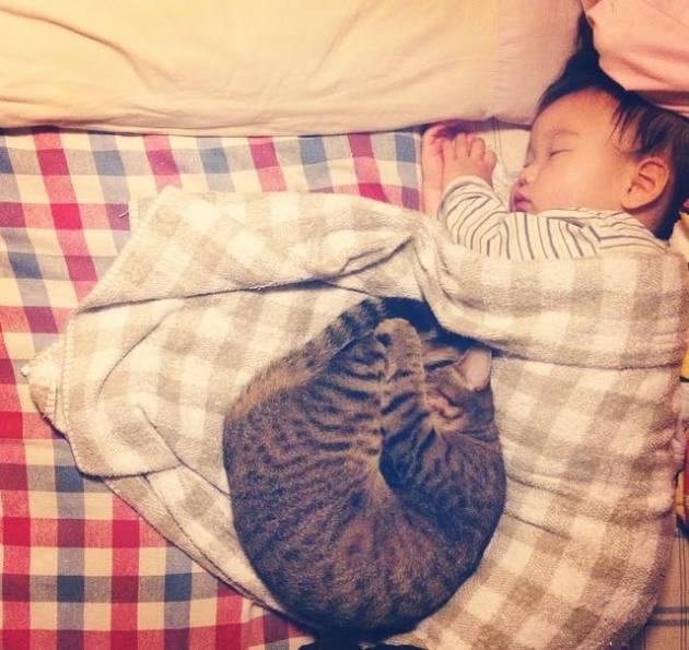copil si pisica 3