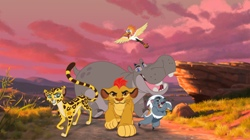 Garda felină