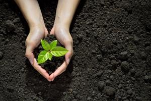 plantare copac