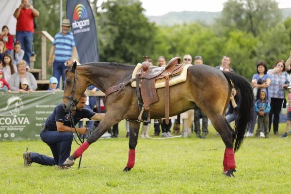 karpatia pony show 2