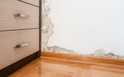mucegaiul in casa