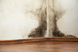 mucegaiul in casa 2