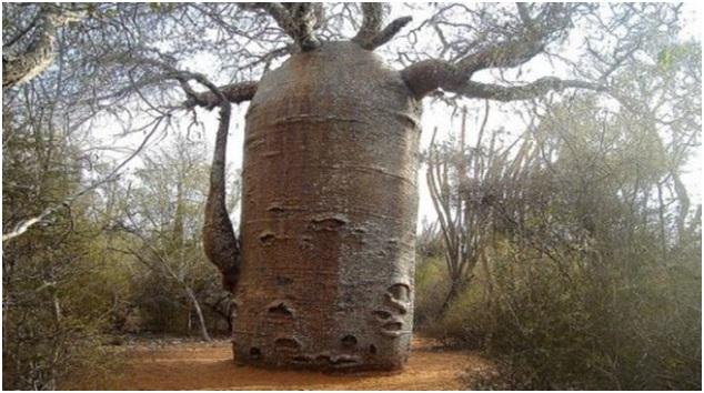 copac inversat