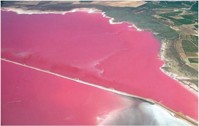 lac roz 2