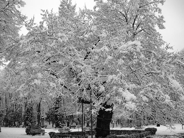 iarna in parc copou
