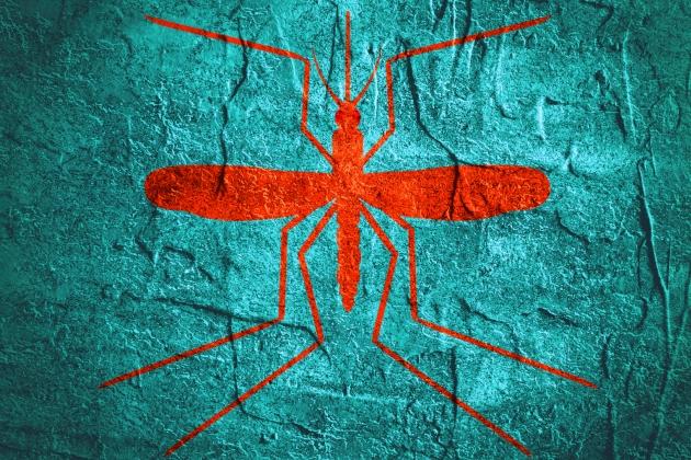 virusul zika in sarcina