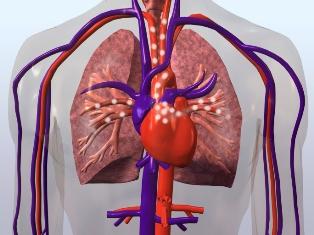 vascularizatie