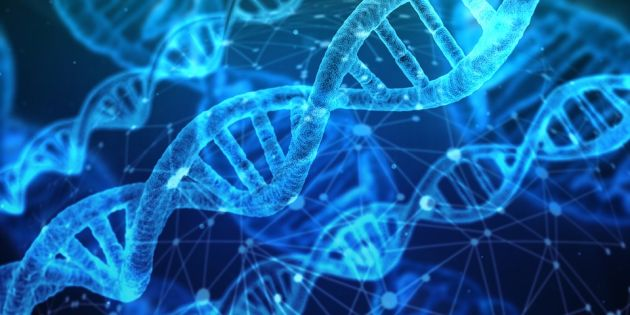 alaptarea activeaza gene