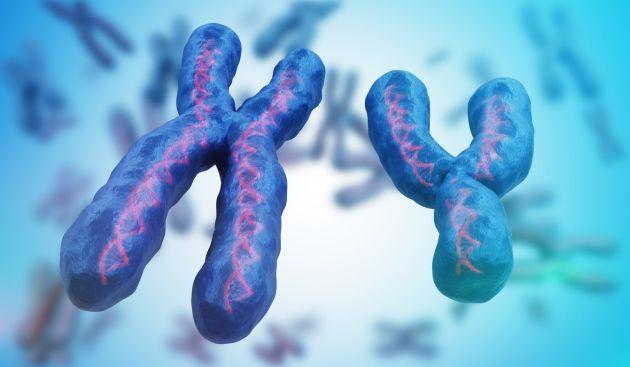 femeile absorb celule ADN